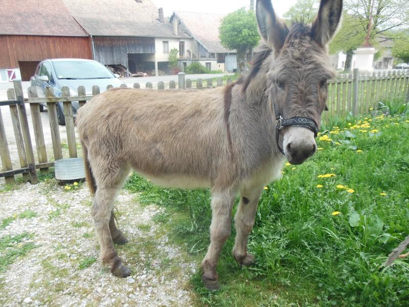 DIDOU - âne né en 2008  - adopté en mars 2011 par Comtois&co - Page 3 Didou_18