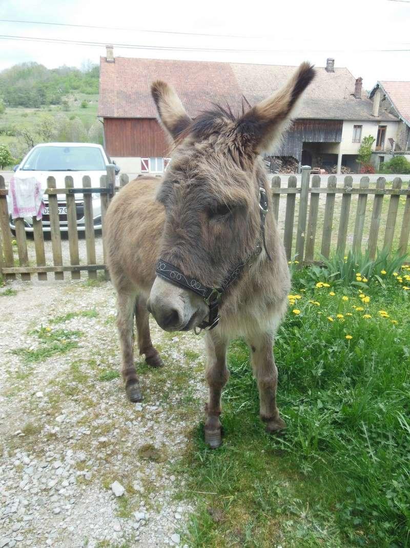 DIDOU - âne né en 2008  - adopté en mars 2011 par Comtois&co - Page 3 Didou_19