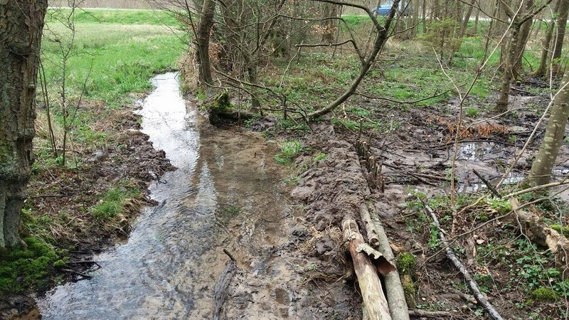 Réhabilitation d'un ruisseau frayère Barrag10