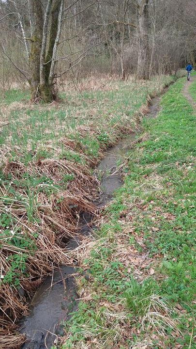 Réhabilitation d'un ruisseau frayère Le_rui10
