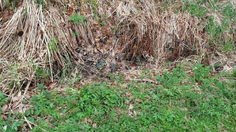 Réhabilitation d'un ruisseau frayère Ruisse10