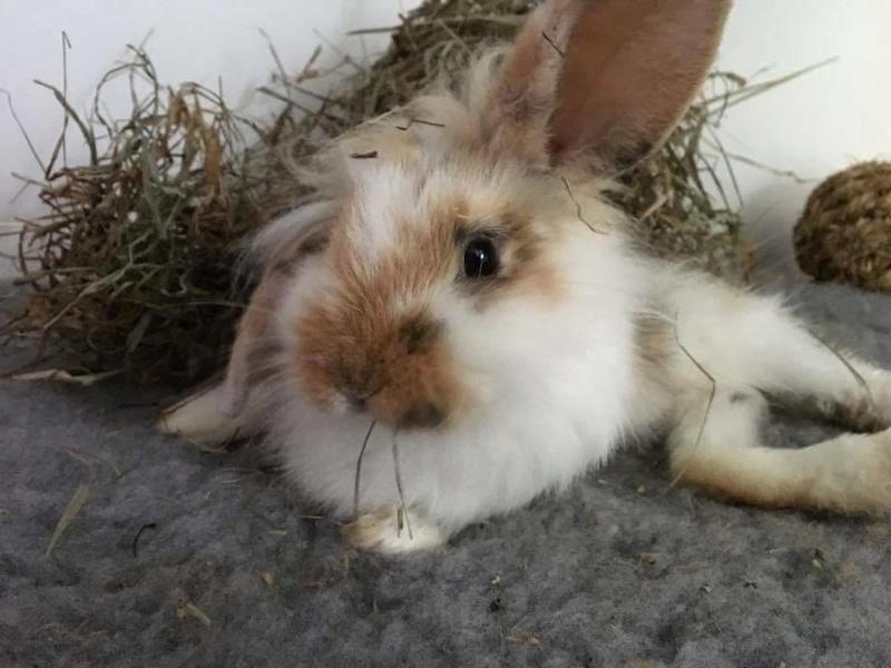 FUSHIA petite lapine 18280710