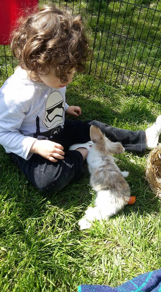 FUSHIA petite lapine 18341610
