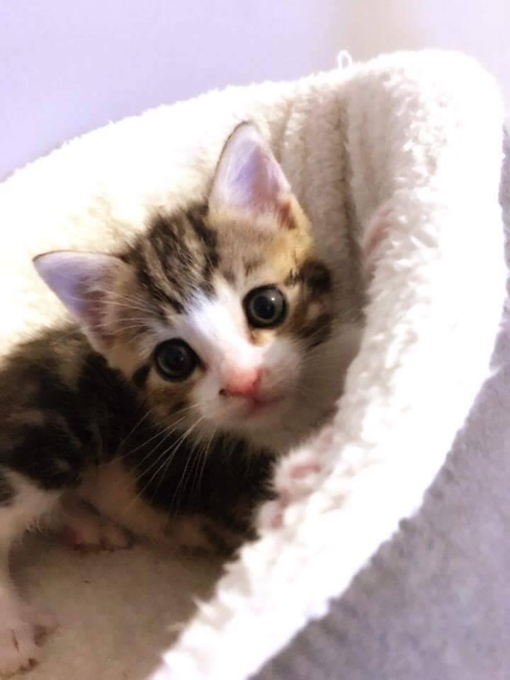 ABU et YAGO chatons de 3 semaines trouvés dans un carton Abu411