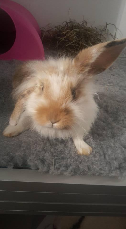 FUSHIA petite lapine Fushia10
