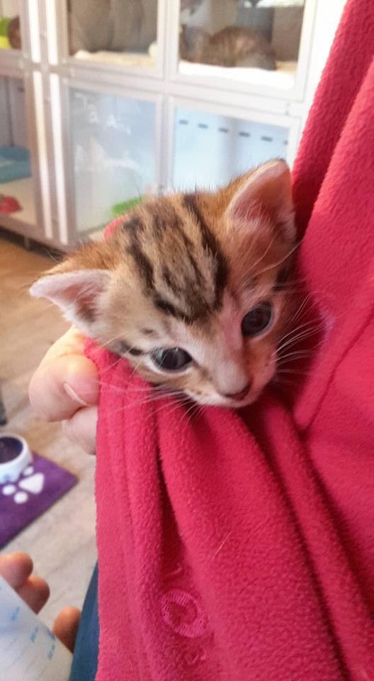 ABU et YAGO chatons de 3 semaines trouvés dans un carton Yago110