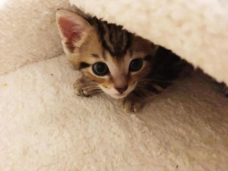 ABU et YAGO chatons de 3 semaines trouvés dans un carton Yago311