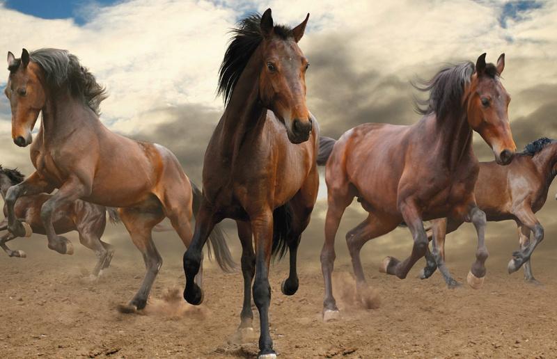 les chevaux  - Page 4 _5710