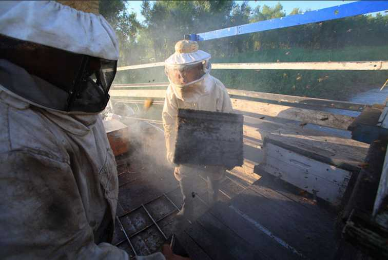 Le peuple des abeilles 2014-127