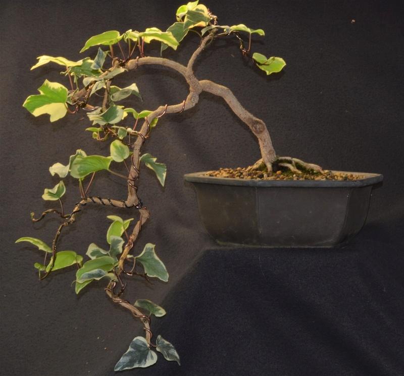Ivy Cascade Dsc_0011