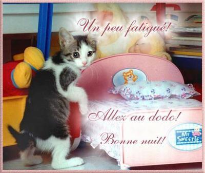 pour les amoureux des chats - Page 4 Bonne_10