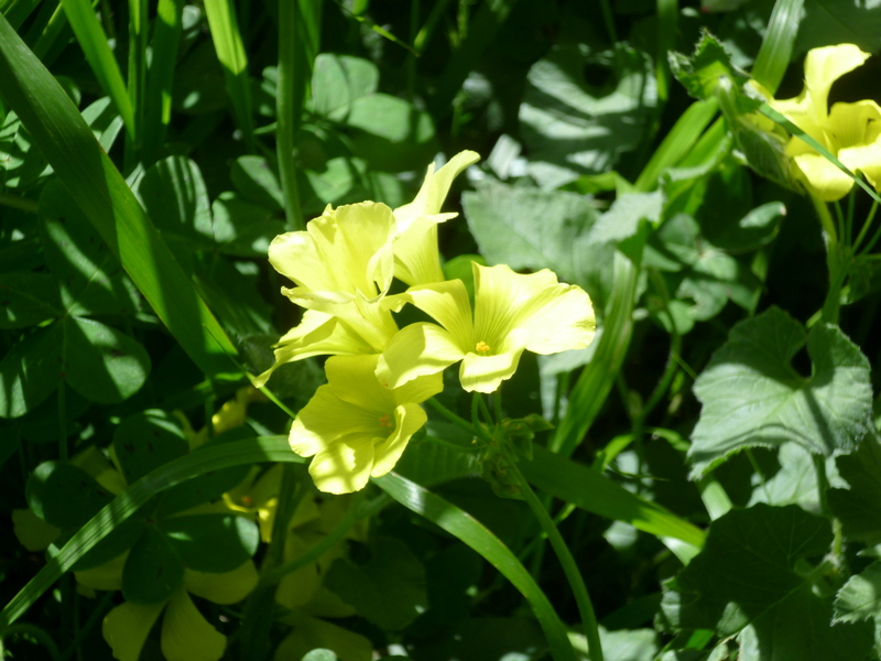 deux ou trois fleurs dans le vent - Page 2 P1080311