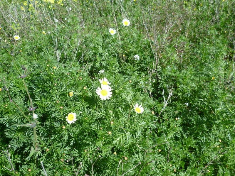 deux ou trois fleurs dans le vent - Page 2 P1080313
