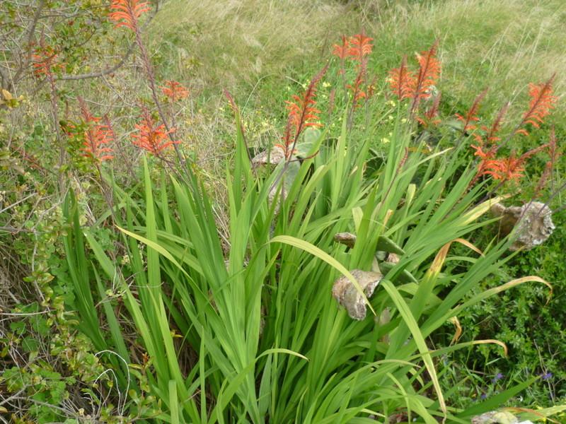 deux ou trois fleurs dans le vent - Page 4 P1080321