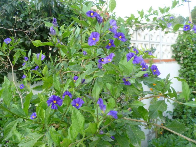 deux ou trois fleurs dans le vent - Page 4 P1080328