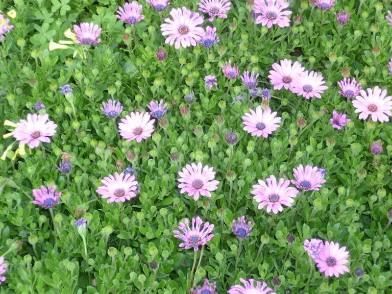 deux ou trois fleurs dans le vent - Page 4 P1080329
