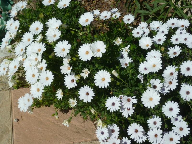 regain fleuri P1080330