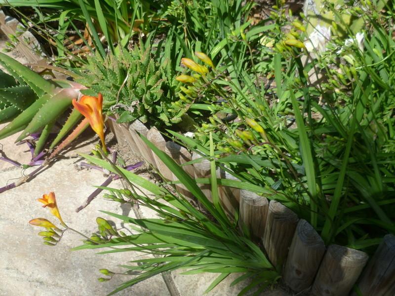 regain fleuri P1080335