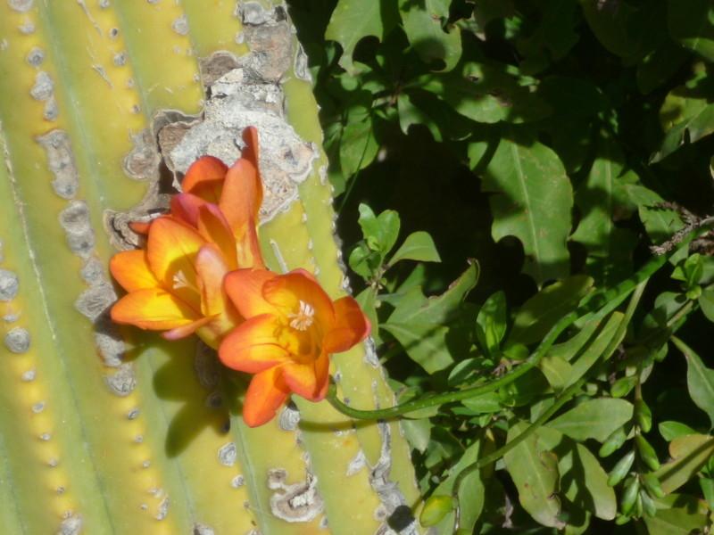 regain fleuri P1080336