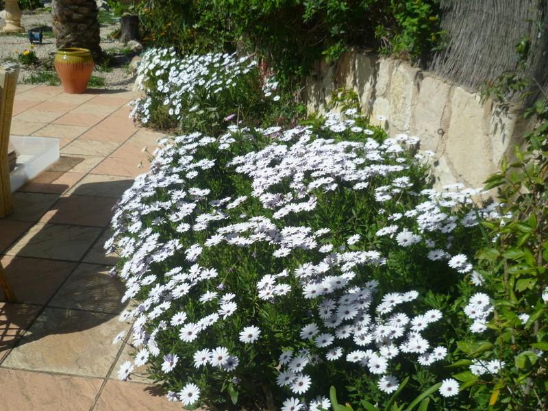 regain fleuri P1080337