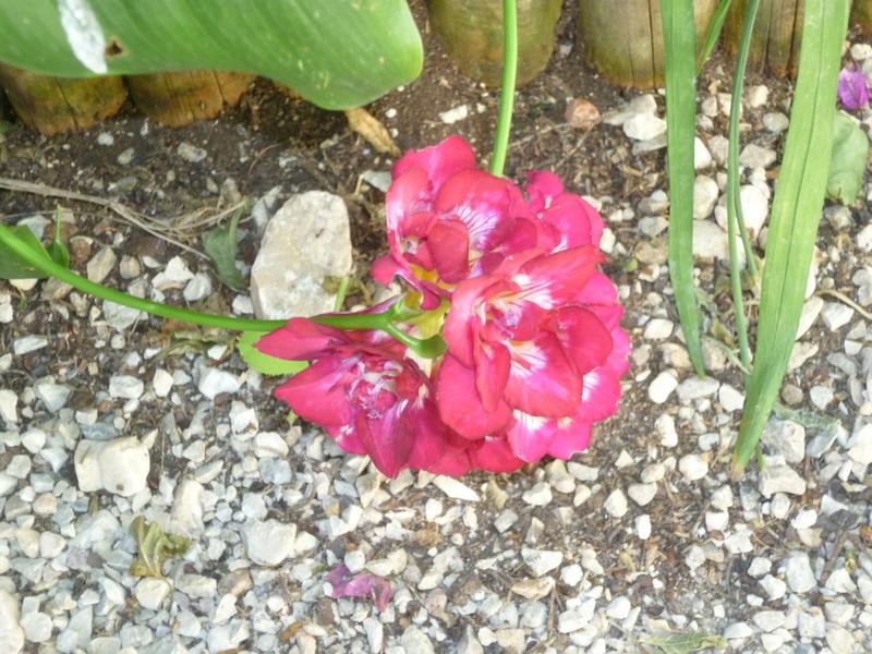 regain fleuri - Page 2 P1080416