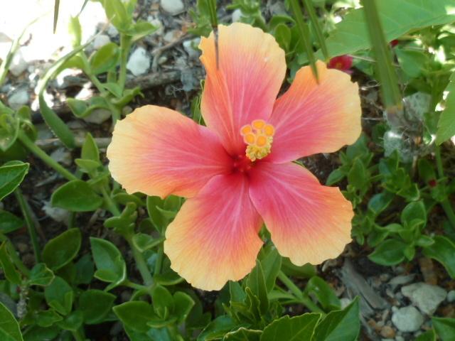 ces quelques fleurs de nos jardins P1080628