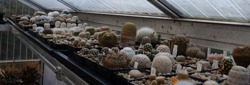 Mammillaria collector 00614