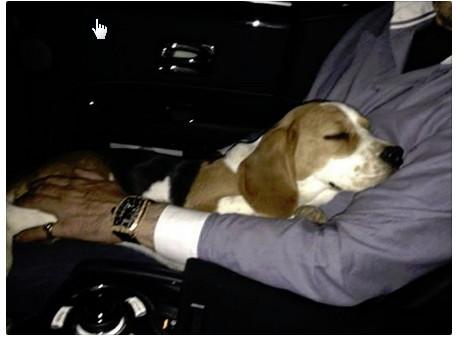 URGENT Petite beagle de 6 mois à placer région Lausanne Screen13