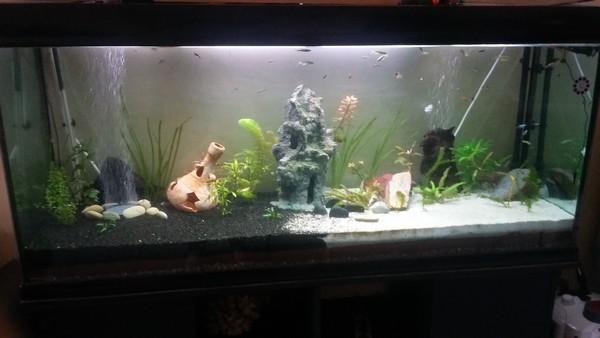 quel éclairage pour mon aquarium Aqua_412
