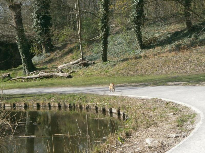 Balades canines en Nord (59)/Pas de Calais (62) - Boulogne-sur-Mer, Calais et Lille - Page 3 10153710