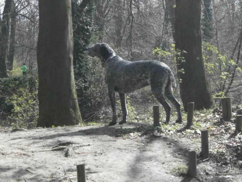 Balades canines en Nord (59)/Pas de Calais (62) - Boulogne-sur-Mer, Calais et Lille - Page 3 13941310