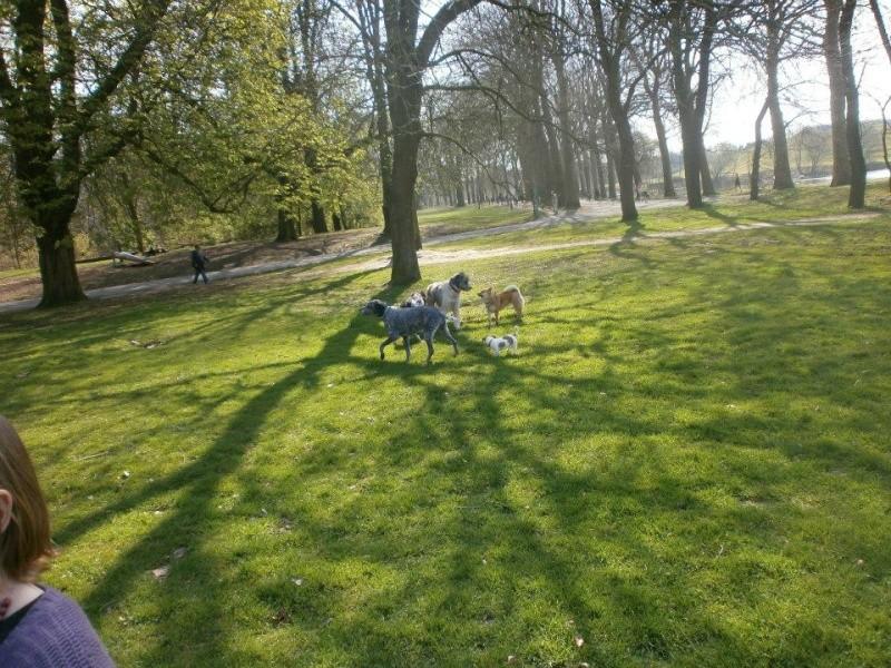 Balades canines en Nord (59)/Pas de Calais (62) - Boulogne-sur-Mer, Calais et Lille - Page 3 Lescou10