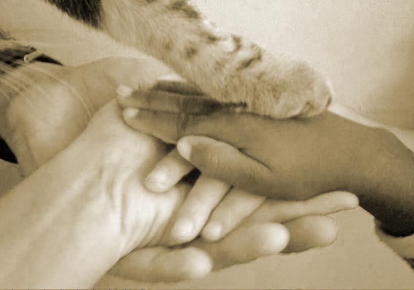 Autour de l'adoption