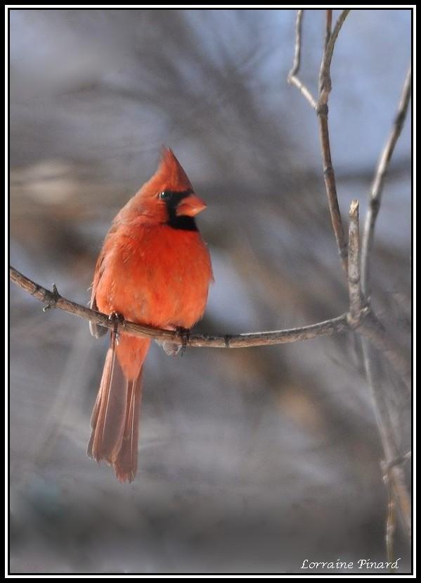 Cardinal 24-03-10