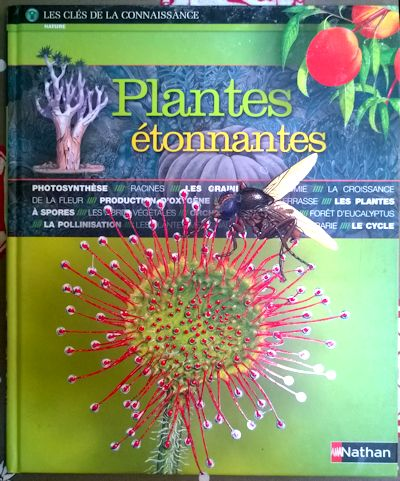 Plantes étonnantes - Nathan mars 2005 Plante10