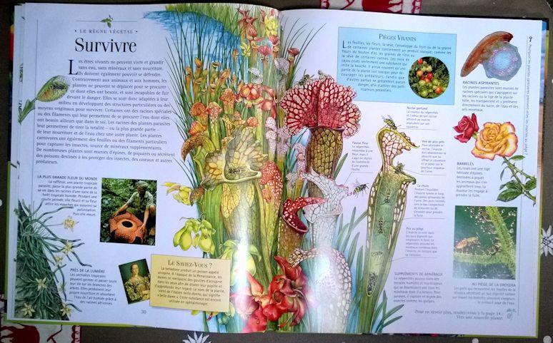 Plantes étonnantes - Nathan mars 2005 Plante11