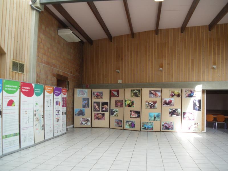 Création d un musée de la coquille Ottmar12