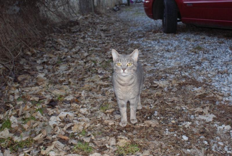 adoptés Les 4 chats bleus  en urgence chateki04 40010