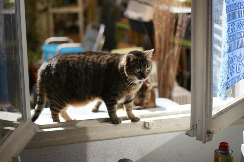 adoptée  Thelma chatte tigrée et sa chatonne 04/06 Chats_32