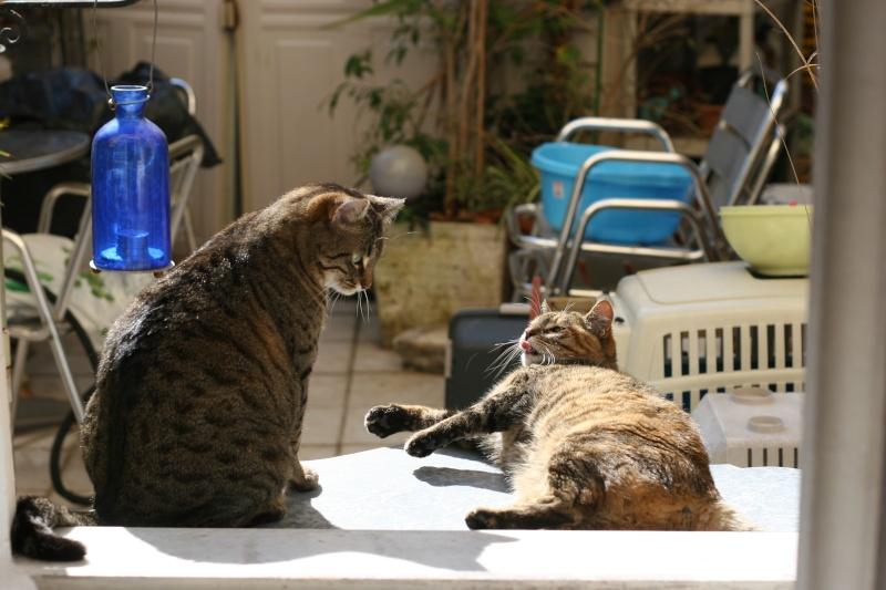 adoptée  Thelma chatte tigrée et sa chatonne 04/06 Chats_34