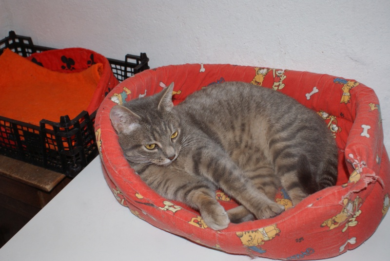 adoptés Les 4 chats bleus  en urgence chateki04 Chatte11
