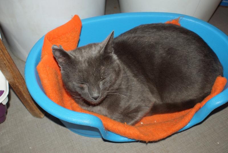adoptés Les 4 chats bleus  en urgence chateki04 Feelin10