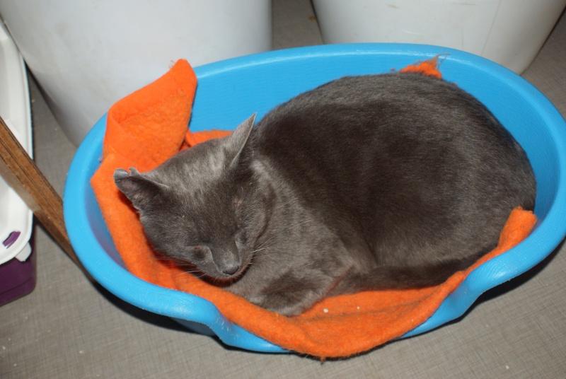 adoptés Les 4 chats bleus  en urgence chateki04 Feelin11