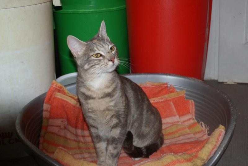 adoptés Les 4 chats bleus  en urgence chateki04 Photos12