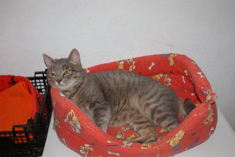 adoptés Les 4 chats bleus  en urgence chateki04 Photos13