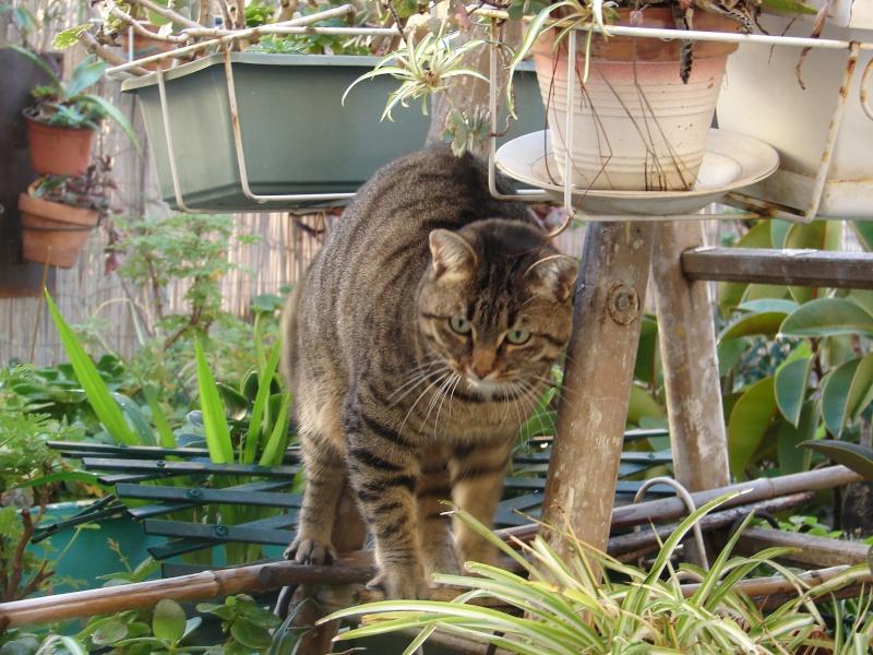adoptée  Thelma chatte tigrée et sa chatonne 04/06 Tino_i16