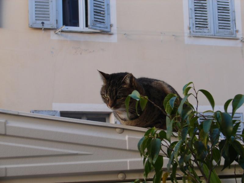 adoptée  Thelma chatte tigrée et sa chatonne 04/06 Tino_i17