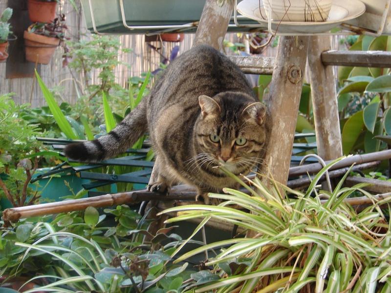 adoptée  Thelma chatte tigrée et sa chatonne 04/06 Tino_i18