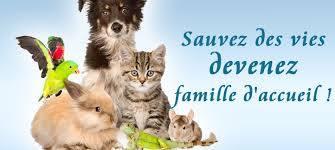 Recherche famille d'accueil pour chiens et chats EN DANGER 18486010