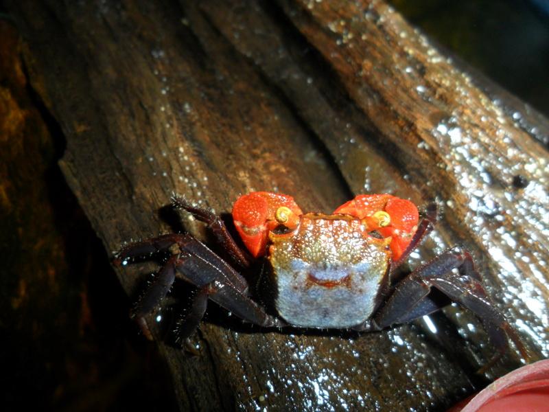 Serpentine Crabe10